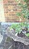 植木鉢、淡い緑が、綺麗カナ